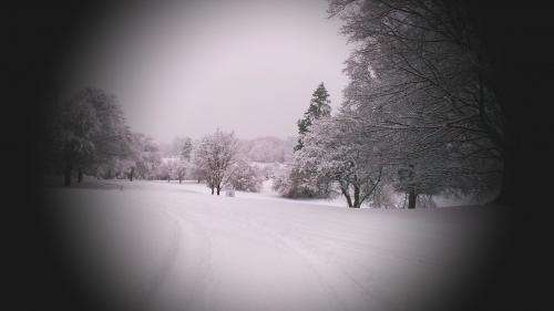 Arboretum.Snow.jpg